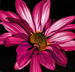 draw-a-flower
