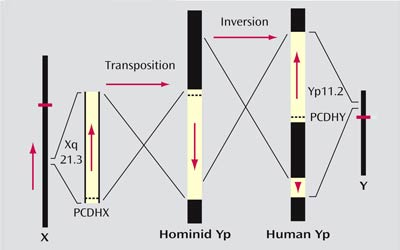 EvoluzionePsiche6-4_400x250