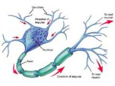 Neurone2_240x180