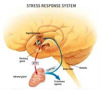 Stress2_200x180