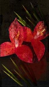 fiore ijoio