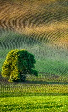 lonely-tree-in-ploughed-field-P75BFXS.jpg