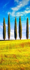 tuscany-cypress-trees-row-countryside-landscape-PG5YPD7.jpg