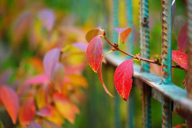 colorful-vegetation-in-autumn-season-PE2LJ7Q.jpg