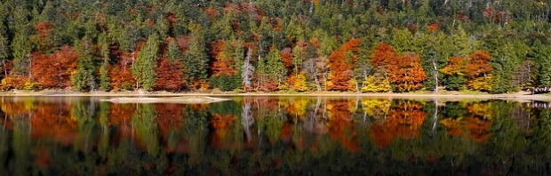 autumn-forest-reflected-in-immag8ni.jpg