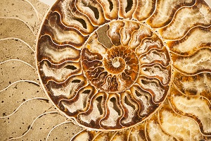 detail-of-ammonite-fossil-shell-PP5M8C4.jpg