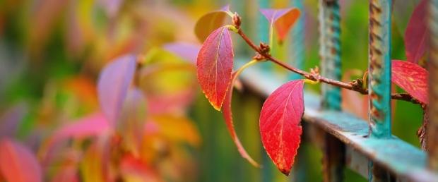 colorful-vegetation.jpg