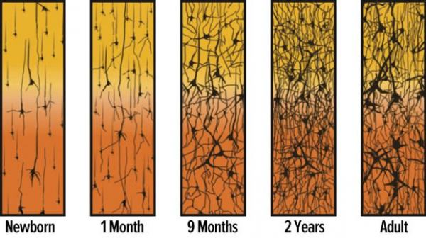 ch1-fg3-synapse-density-over-time-600x336